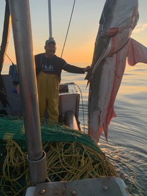 Barnegat Light fisherman: 'Oh my God, there's a great white shark in the net' – Asbury Park Press